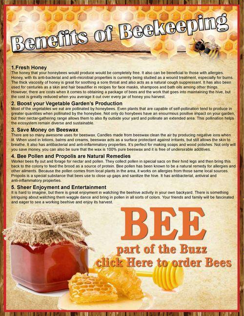 Bee Catalog