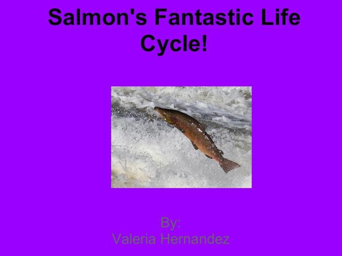 Salmons Fantastic Life Cycle