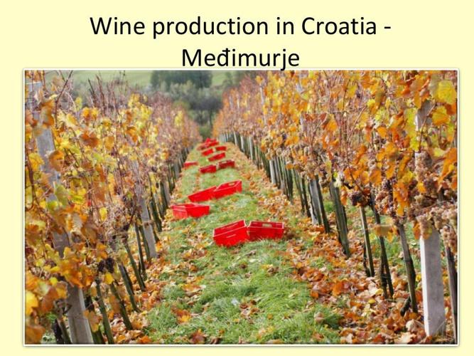 Proizvodnja_vina_u_Hrvatskoj