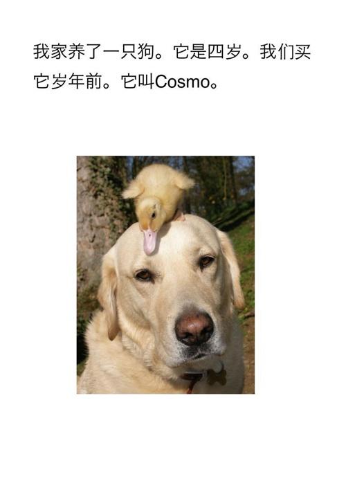 Chinese Unit 2: Pets