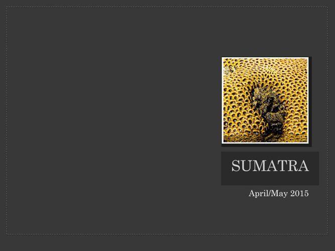 Sumatra album