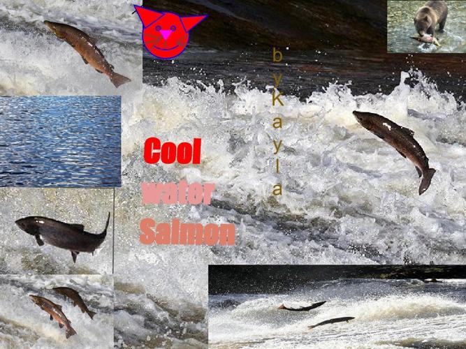 kayla salmon