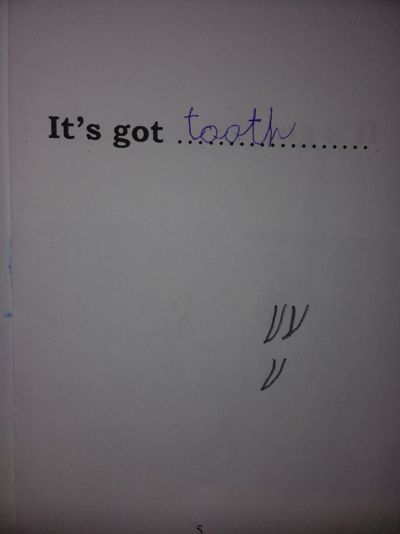 Animal Spelling Booklet 4
