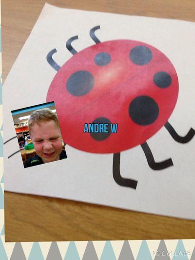 Caplinger's Grouchy Ladybugs