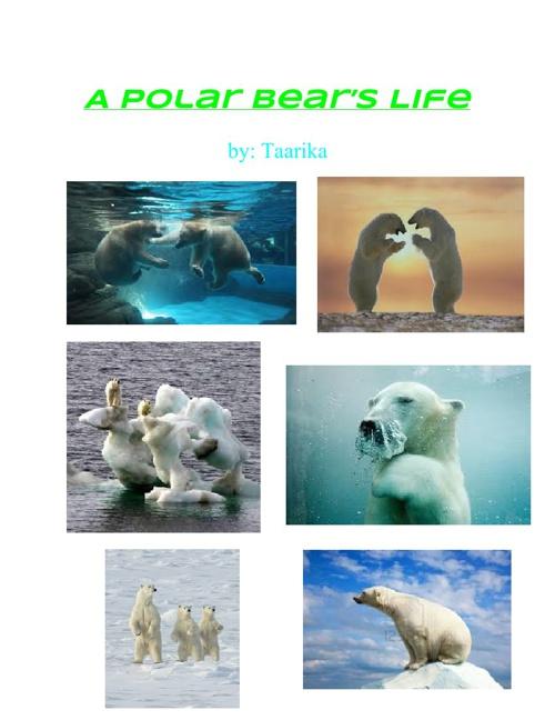 A Polar Bear's penis