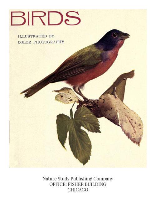 Birds, Illustrated (caption, video, outline)