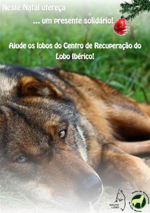 Neste Natal ofereça um presente solidário. Ajude o lobo ibérico!