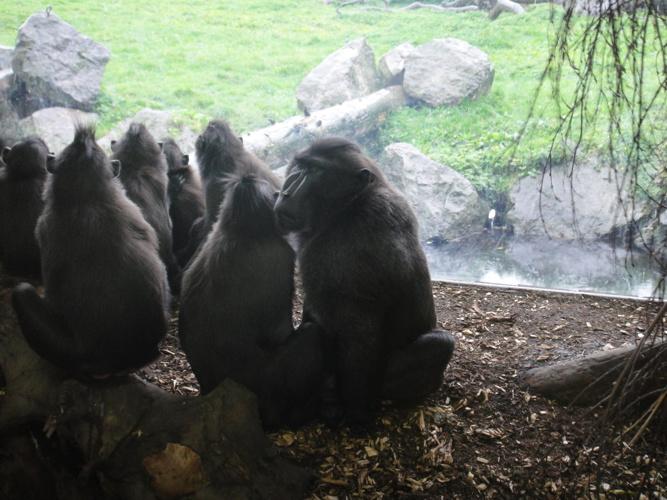 Zoo 2014