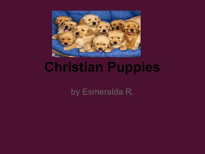 crishten puppies