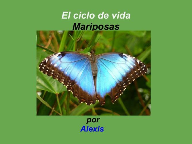 Alexis Mariposa