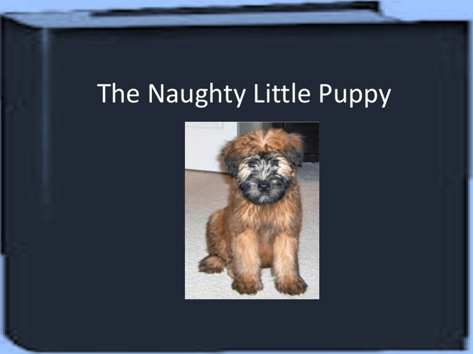 The Naughty Little Puppy