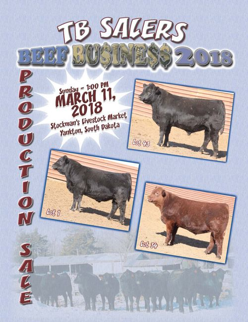 TB Salers Beef Business 2018 Production Sale