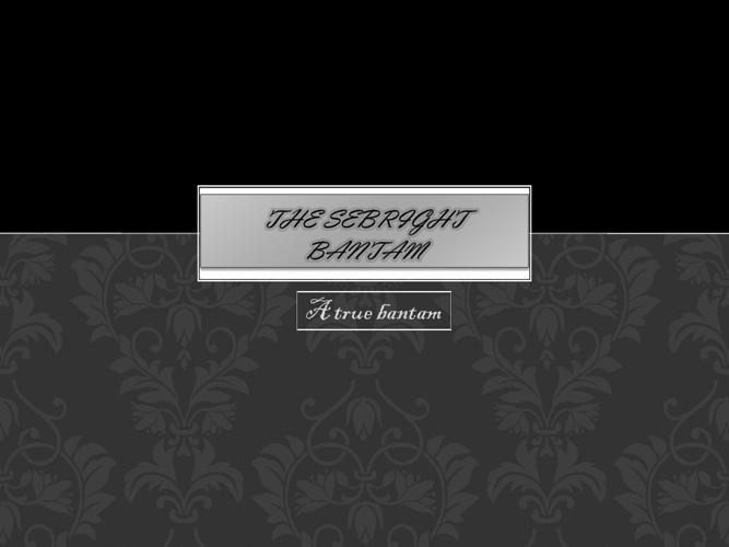 The Sebright Bantam