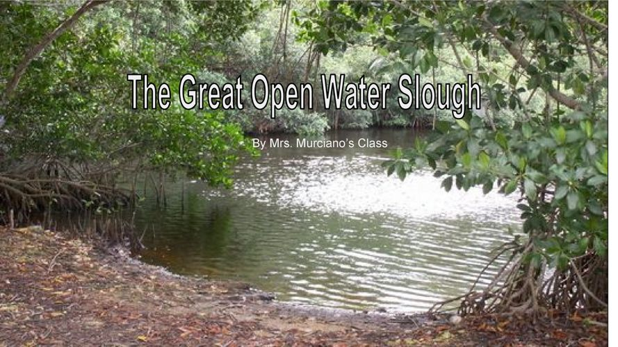 1 Open Water Slough