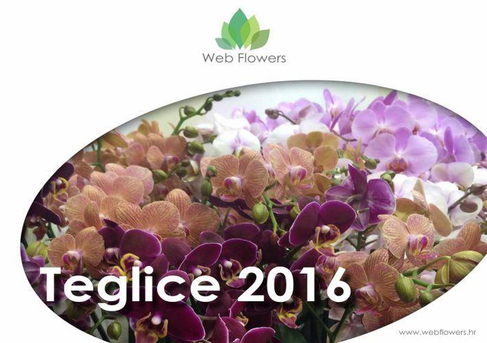 Katalog Teglica 2016
