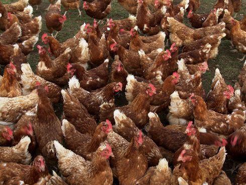 Dieren op de boerderij