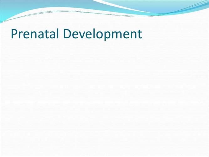 Prenatal Development and problems 3