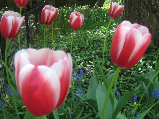 Central Park Spring 2006 008