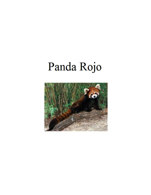 Copy of Panda Rojo