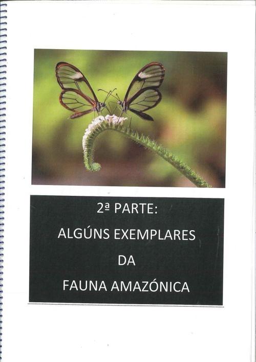 libro_4º brasil