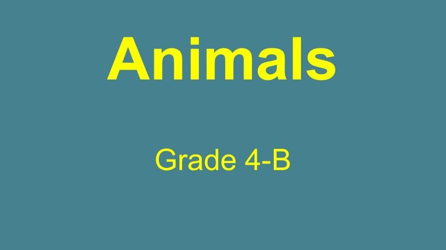 Animals (Grade 4-B)