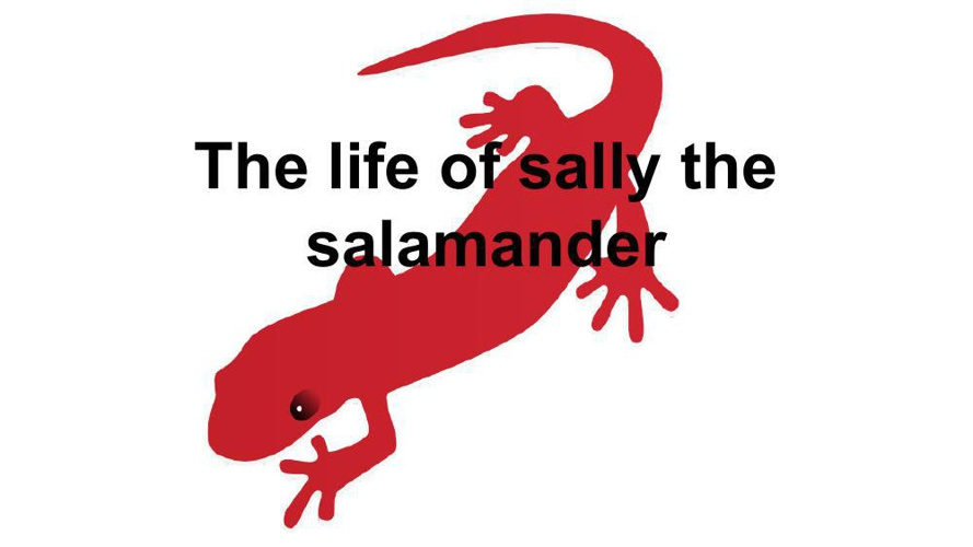 the life cycle of a salamander