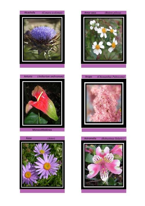 Plantas Hornamentales