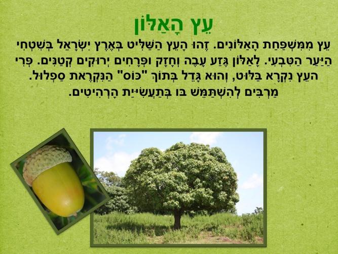 Copy of מידע אודות העצים