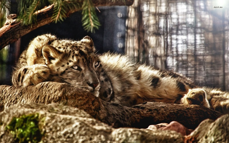 26444-painting-of-a-resting-leopard-1680x1050-artistic-wallpaper