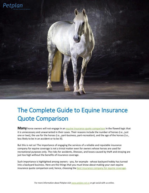 The Complete Guide to Equine Insurance Quote Comparison