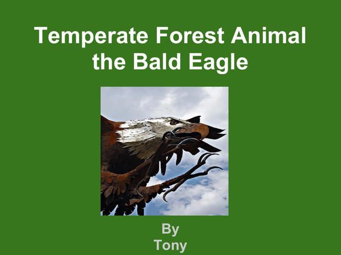 Tony bald eagle