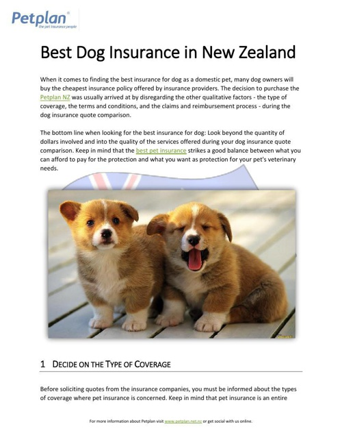 Best Dog Insurance in New Zealand
