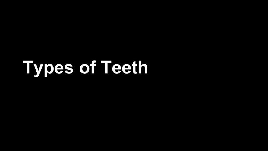 Types of Teeth (1)