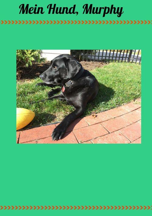 Mein Hund, Murphy