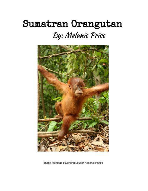SumatranOrangutanMelaniePrice2