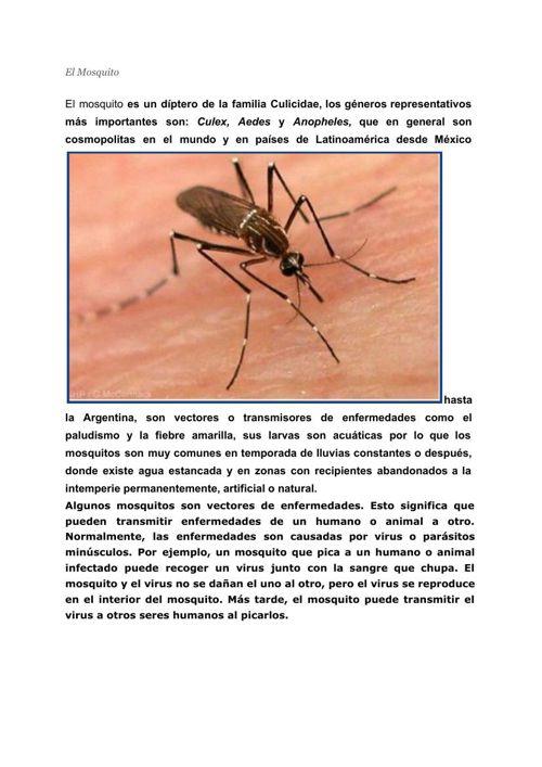 ElMosquito