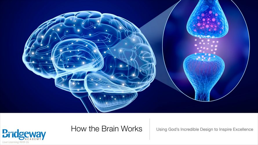How the Brain Works Part Two 2017