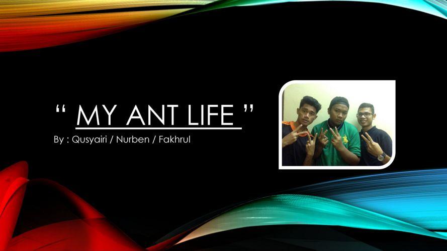 MY ANT LIFE