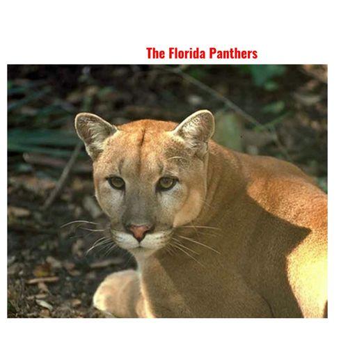 The Florida Panthers
