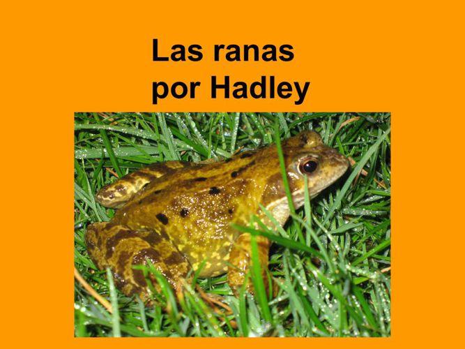 Hadley Las ranas