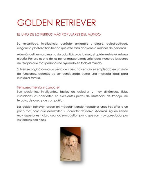 GOLDEN RETRIEVER PNM