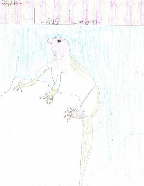 Cameron Quance Galapagos Island E Book