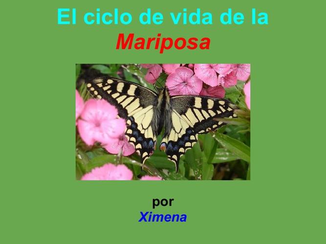Ximena mariposa