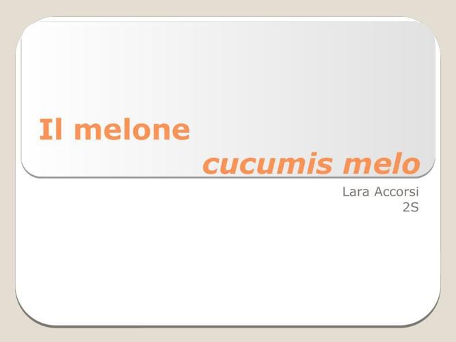 Il melone-2