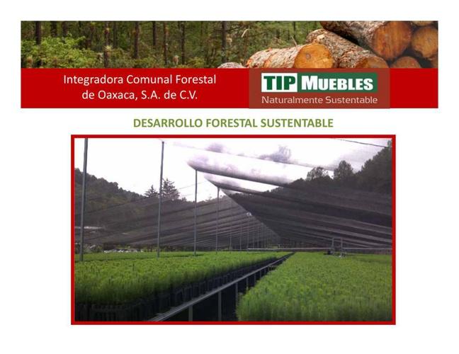 Estudio de caso Productores Forestales.