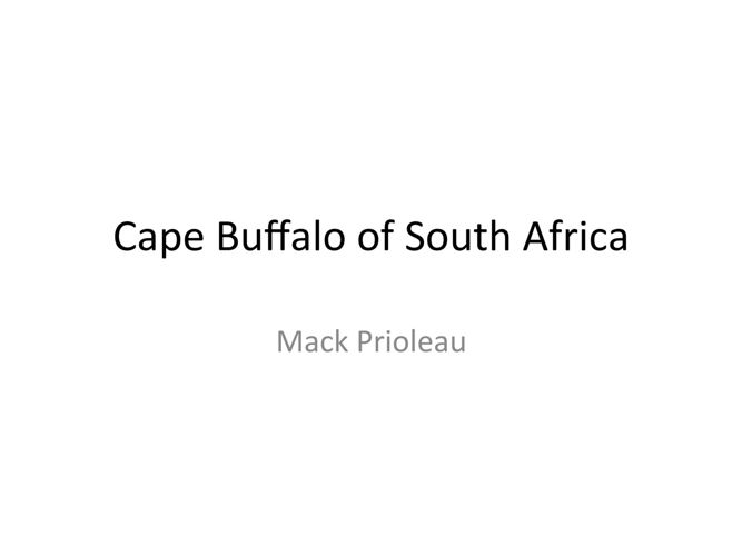 Cape Buffalo of South Africa - Mack Prioleau