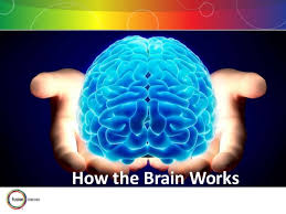 how brain is work