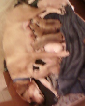 Copy of Dakota's Puppies