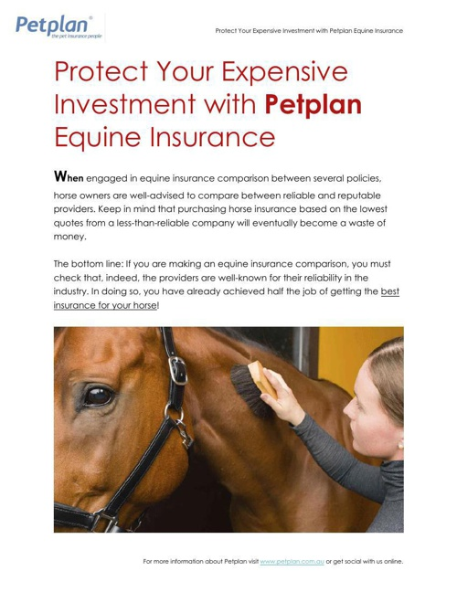 Protect Your Expensive Investment with Petplan Equine Insurance