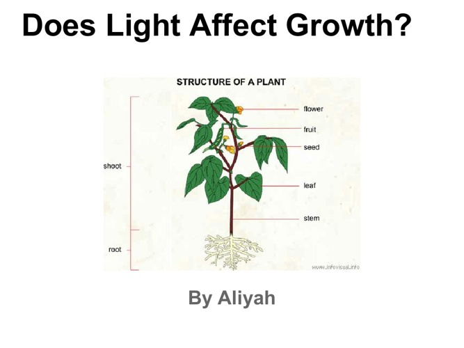 aliyah plant